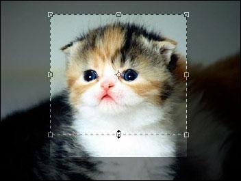 Cara Crop sebuah Foto di Photoshop [Mudah]